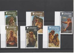 Singes -Monkeys - Gibraltar
