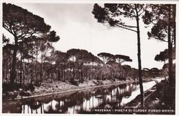 CARTOLINA - POSTCARD - RAVENNA - PINETA DI CLASSE ( FOSSO GHIAIA ) - Ravenna