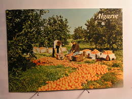 Algarve - - Faro