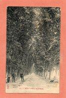 CPA - REIMS (51) - Thème : Arbre - Aspect De L'allée Des Tilleuls En 1906 - Reims