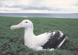 GRAND ALBATROS - TAAF : Terres Australes Antarctiques Françaises