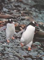 MANCHOS PAPOUS - TAAF : Terres Australes Antarctiques Françaises