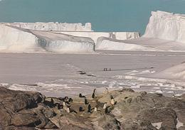 MANCHOTS ADELIE Devant Glacier De L'ASTROLABE - Voir Le Scan - TAAF : Terres Australes Antarctiques Françaises