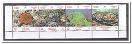 Oman 2004. Postfris MNH, Corals - Oman