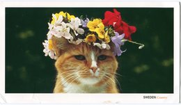 Sweden Postcard Cat Used 2011 In Denmark - Sweden
