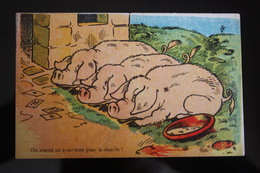 Playing Card- Pig - Cochon  - Vintage Postcard - Playing Cards