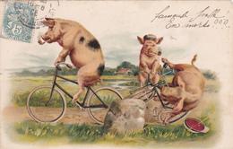 CPA Animal Humanisé Cochon Porc Pig Vélo Bicyclette Cycliste Cycling Radsport Illustrateur - Cochons