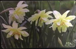 Paco \ ROMANIA \ RO-ROM-0179 \ Flowers 7 \ Usata - Romania
