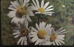 Paco \ ROMANIA \ RO-ROM-0187A \ Flowers 9 (1st Printing) \ Usata - Romania