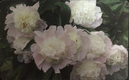 Paco \ ROMANIA \ RO-ROM-0360a \ Flowers 1 \ Usata - Romania