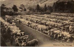 Viehschau In Oey Diemtigen - BE Berne