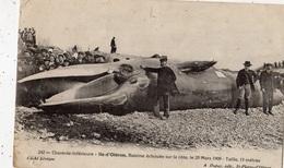 ILE D'OLERON BALEINE ECHOUEE SUR LA COTE LE 25/03/1909 TAILLE 15 METRES - Ile D'Oléron