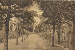 Wepener - Avenue  [AA16-1389 - South Africa