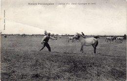 Moeurs Provencales  -  Capture D'un Cheval Camargue Au Lasso - France