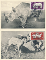 DDR / Tierpark Berlin - 1956 , Elefant , Nashorn , Eisbeer , ... - 6 MC , Maximumkarten - Tierwelt & Fauna