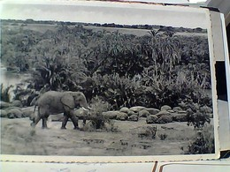 CONGO BELGA  BELGE ELEFANTE ELEPHANT IPPOPOTAMES STAMP TIMBRE SELO  5 F Maschera 50 C Flower P Avion GX5739 - Congo Belga - Altri
