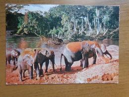 Kenia, Kenya / Nairobi, Elephants Bathing --> Written - Kenya