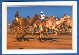 Qatar; Camel Race - Qatar