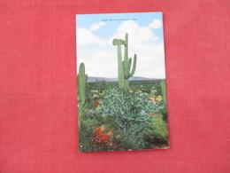 Three Species Of Cacti -- Ref 3076 - Cactusses