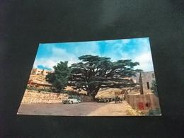 LIBANO LIBAN LEBANON  CEDARS THE CEDARS  GREGGE AUTO CAR - Libano