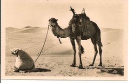 L74A794 - Scènes Et Types - La Prière Au Désert - CAP N°1119 - Western Sahara