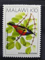 MALAWI TIMBRE NEUF - OISEAU - ANTHREPTES ANCHIETAE 10 K - BIRD STAMP - 1988 - Hummingbirds
