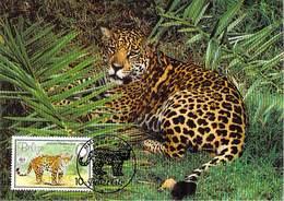BELIZE     WWF CARTE MAXIMUM NUM.YVERT  65x  PROTECTION DE LA NATURE  JAGUAR PANTHERE - Maximum Cards