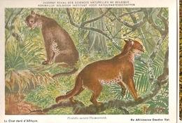 Belgium & Postal, Musée D'Histoire Naturelle De Belgique, Le Chat Doré D'Afrique, Caracal Aurata (6) - Belgique
