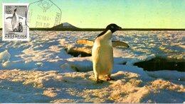 ARGENTINE. PA 82 De 1961 Sur Carte Maximum. Manchot. - Antarctic Wildlife