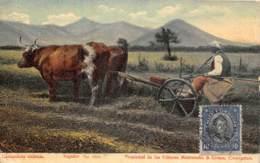 Chili / Belle Oblitération - 06 - Costumbres Chilenas - Beau Cliché - Agriculture - Chile