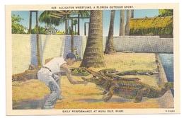 US Alligator Wrestling Musa Isle Miami Seminole Native Americans Florida FL Linen Postcard - Native Americans