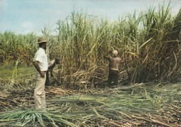ESCALE A L ILE MAURICE PLANTATION CANNE A SUCRE OUVRIERS AU TRAVAIL PUBLICITE AMORA DIJON MOUTARDE - Mauritius