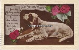 .Nice Spaniel On Real Photo Postcard - Dogs