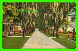 BILOXI, MS - BEAUTIFUL BENACHI AVE. - TRAVEL IN 1945 - BARBER & THATCHER - - United States