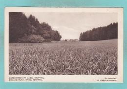 Old Post Card Of Gutswirtschaft Maggi,Kempttal,R67. - Postcards
