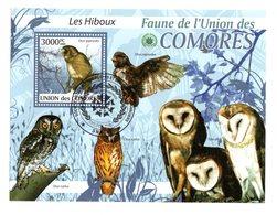 Hiboux Bloc De L'Union Des Comores - Búhos, Lechuza