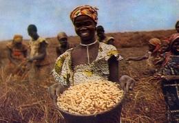 La Cote Occidentale D'afrique - V - Cameroun - Recolte Des Cacahuetes - Formato Grande Viaggiata – E 9 - Camerun