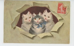CHATS - CATS - Jolie Carte Fantaisie Chats Dans Journal Crevé (signée ) - Cats