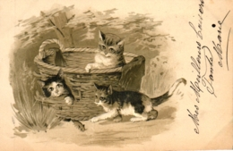 Katze, Katzen Im Korb, Prägekarte, 1901 - Katzen