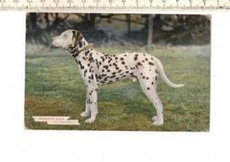 Dieren 134 - Favourite Dogs - The Dalmatian - Hunde