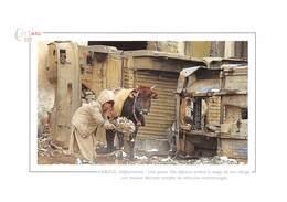 KABOUL / Afghanistan - Une Petite Fille Enlève La Neige De Son Refuge - Vache - Terrorisme - Afghanistan