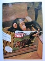ANIMAUX - Singe - Humour - Monkeys