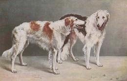 Très Belle Carte Postale Ancienne De Chien Lévrier Barzoi - Dogs