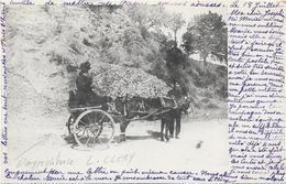 Femme Dans Une Charette à Ane. Le Personnage Est L'expeditrice De La Cpa Circulee En 1904 - Photographs