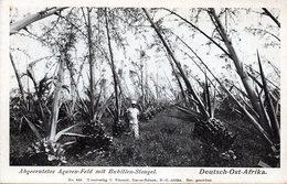D.O.A. - Abgeerntetes Agaven-Feld Mit Bubillen-Stengel - Ehemalige Dt. Kolonien