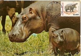 Mozambique & Maximum Card, Protected Animals Hippopotamus, Vila Fontes 1971 1991 (6) - Mozambique