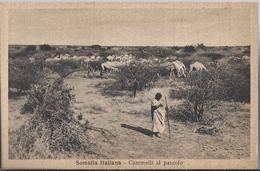Somalia Italiana - Cammelli Al Pascolo - HP1460 - Somalia