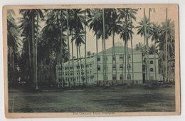 2922 Singapore Coconut Palm - Singapore