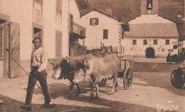 ATTELAGE AUX ALDUDES. Région De Saint-Etienne-de-Baigorry (64). Ramuncho - Attelages