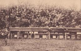 """Adinkerke """"Meli"""" Een Der Talrijke Bijenhallen Van Meli Heeren Florizoone Vaderen Zoon Circulée En 1946 - De Panne"""